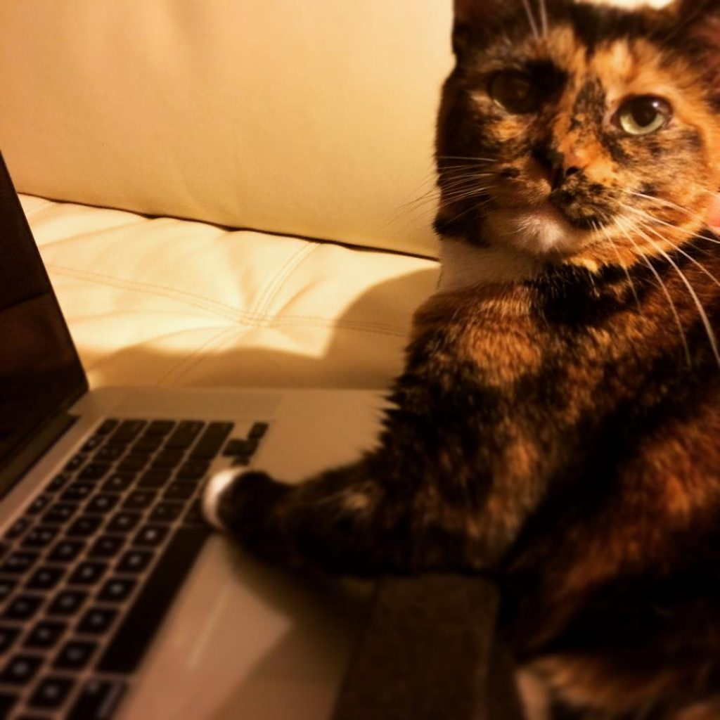 A beautiful tortoiseshell cat with her paws on a laptop